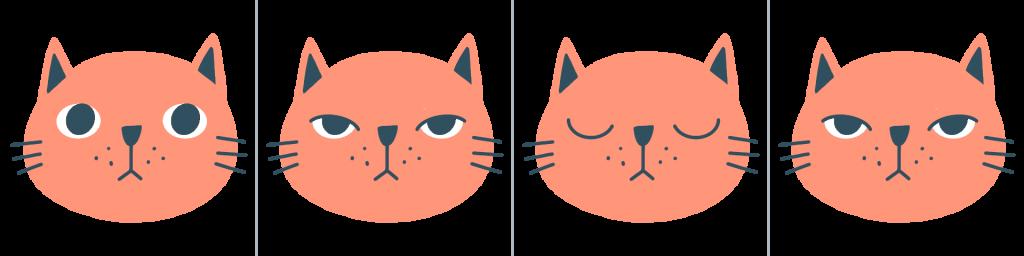 fotogrammi gif gatto